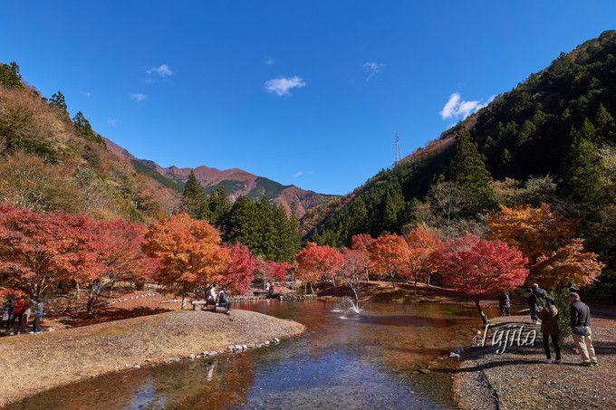 寸又峡の紅葉は渋滞前の早朝に!静岡の秘湯で紅葉狩り