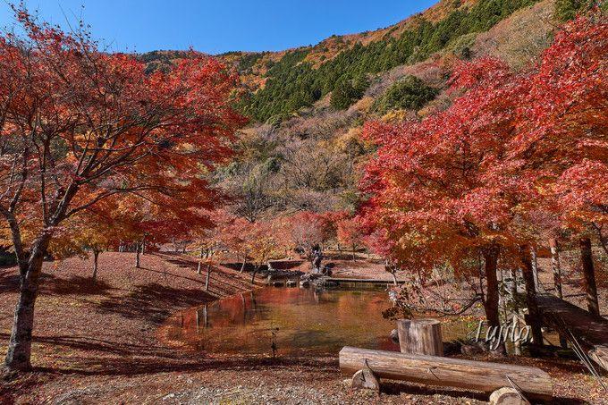 寸又峡の紅葉は草履石公園が必見!