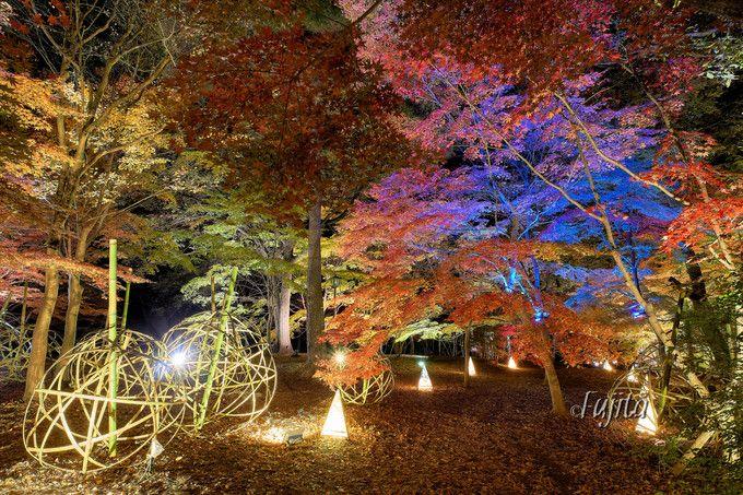 埼玉・森林公園の紅葉ライトアップが美しい!イルミネーションも実施