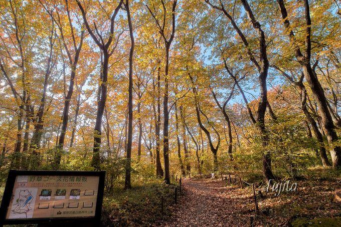 森林公園の紅葉ベスト3!