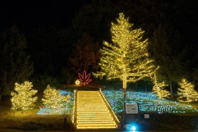 森林公園の紅葉ライトアップは絶景!