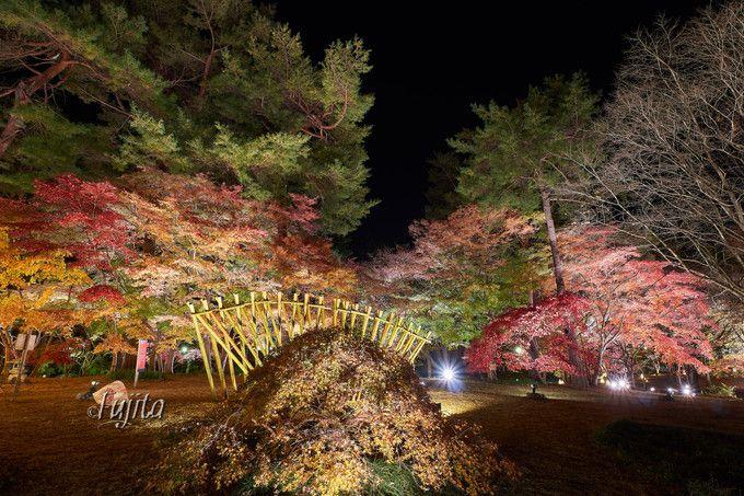 カエデ園の紅葉ライトアップ!