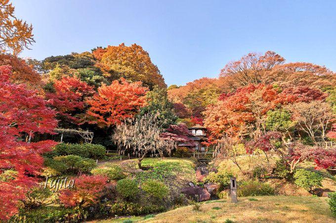 三溪園の紅葉は聴秋閣がおすすめ!