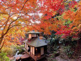 三溪園の紅葉は伝統建築とコラボ!横浜で京都気分の紅葉狩り