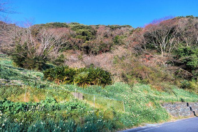 江月水仙ロードまで、保田駅や臨時駐車場から散策!