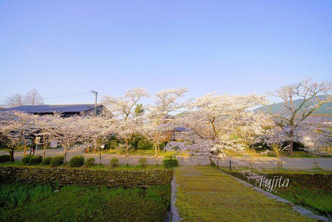 桜並木を一望!秋月城跡・瓦坂