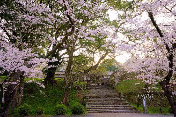 お花見気分満点!長屋門の桜