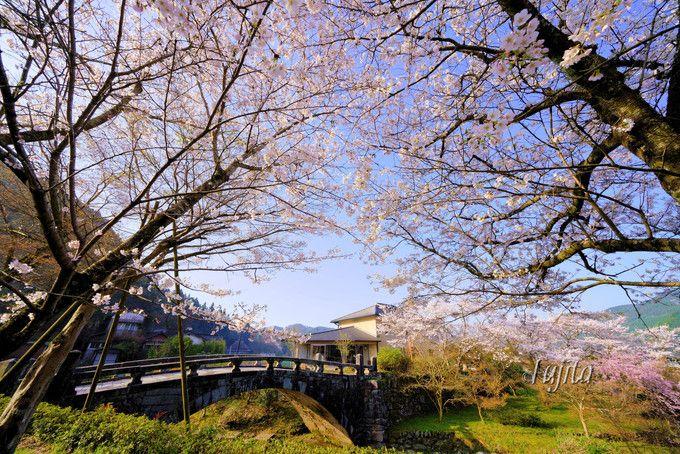 目鏡橋の桜は穴場!
