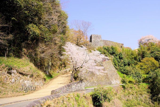 岡城跡の桜は入口も見所!