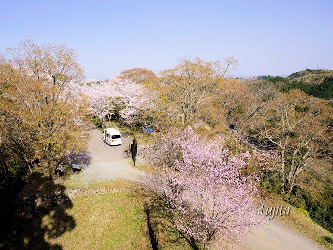 本丸から周囲の桜を一望!