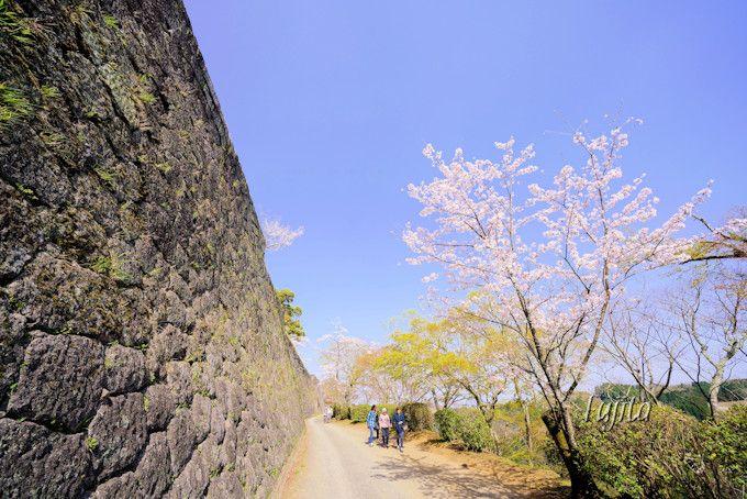 東中仕切の桜が一番のおすすめ!