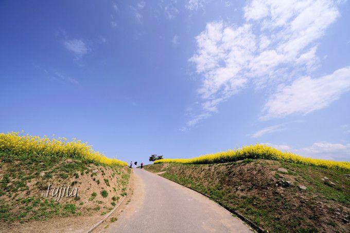 丘巡りの道路も印象的!