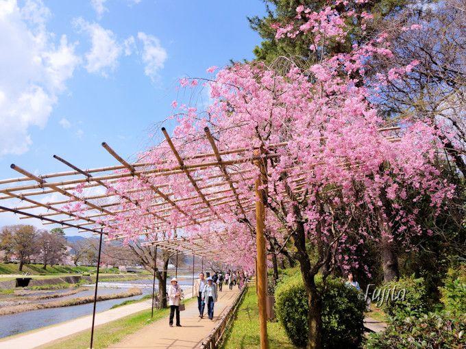 しだれ桜のヒサシが特徴的!