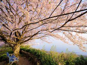 大分のおすすめ桜スポット9選!大分城址や岡城跡でお花見しよう