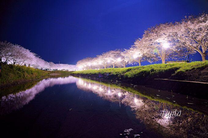 草場川の桜並木ライトアップは穴場!福岡のインスタ映えする花見名所