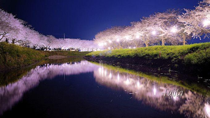 草場川の夜桜ライトアップはインスタ映え確実!