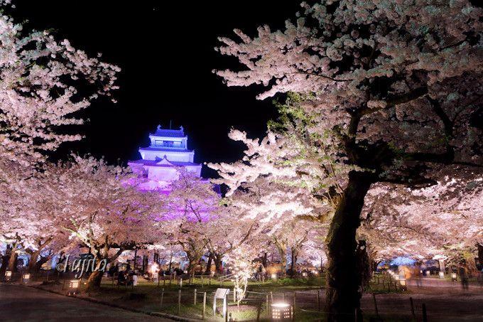鶴ヶ城の桜はライトアップが美しい!