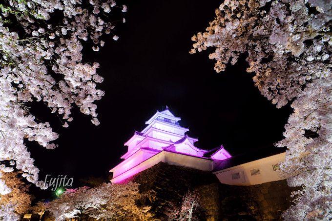 桜と城のコラボを様々な角度から!