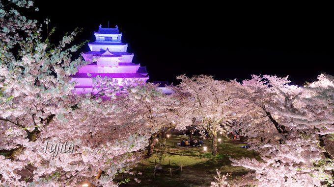 桜のライトアップを石垣から一望!