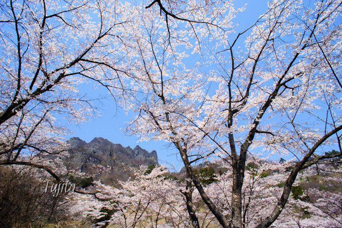 桜の品種が多く彩りも様々