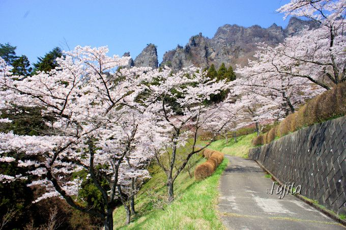 妙義山と桜がコラボ!群馬・さくらの里は見頃が遅い花見名所