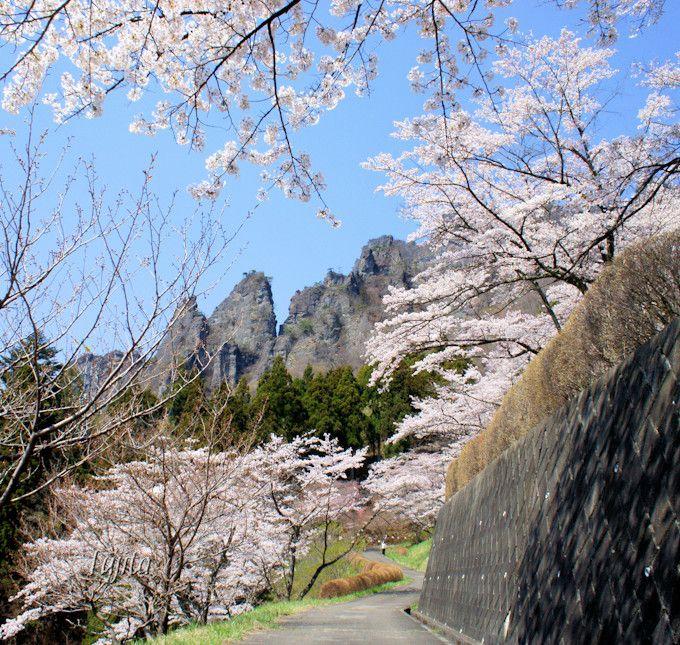 さくらの里は桜と妙義山がコラボ!