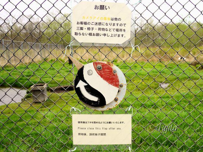 鶴公園は金網に写真撮影用の穴を完備!