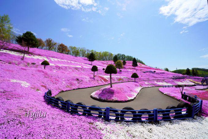 芝桜の中でゴーカートを楽しもう!