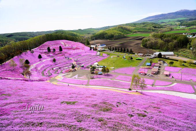 ひがしもこと芝桜公園は朝から絶景!