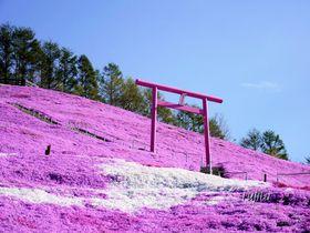 東藻琴芝桜公園の絶景5選!北海道・大空町の芝桜名所は必見