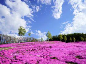 北海道のおすすめ桜スポット10選 北の春も見ごたえたっぷり【2021】