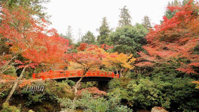 宮島の紅葉のシンボル!紅葉橋は紅葉谷公園の入口