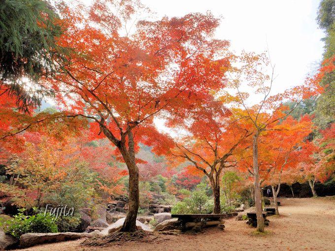 奥紅葉谷公園も紅葉が美しい!