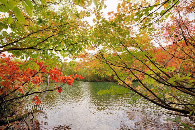 紅葉名所の鎌池は小谷温泉の奥にあります!