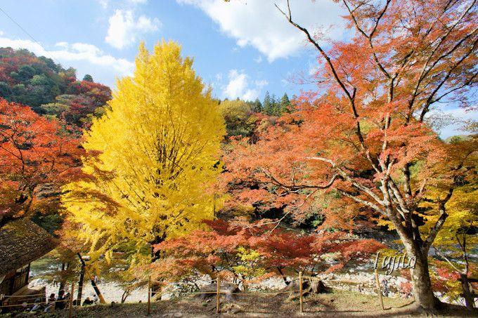 香嵐渓の紅葉は、まさに絵巻物!