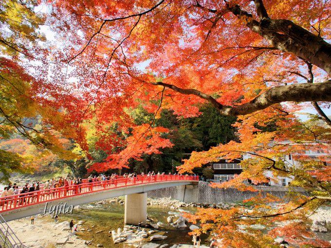 赤い待月橋が紅葉とコラボ!