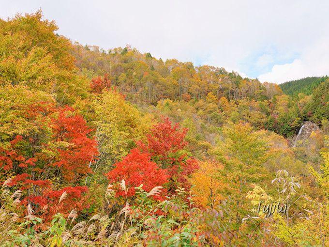 滝見展望台から大倉滝の紅葉を一望!