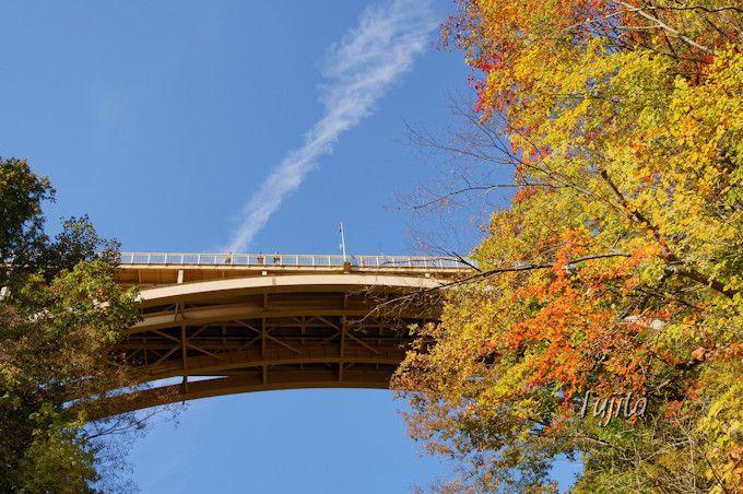 回顧橋から大深沢橋の紅葉を見上げる!