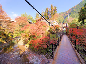 東京・奥多摩の紅葉5選!紅葉狩りにおすすめの渓谷と奥多摩湖