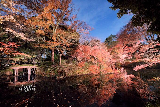 山陰橋と藤浪橋が一面の紅葉に包まれる!