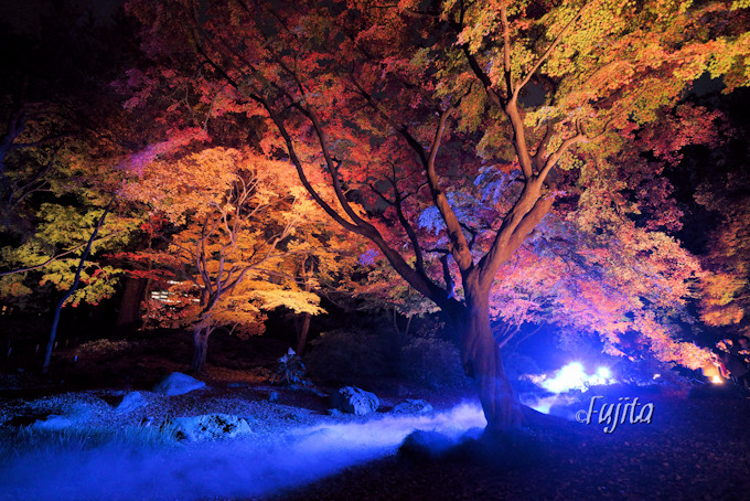 水香江の紅葉ライトアップは現代的!
