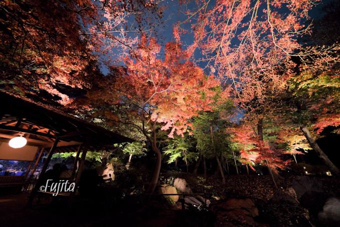 滝見茶屋の紅葉がおすすめ!