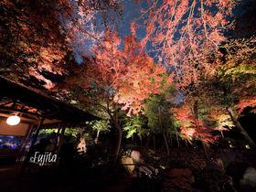 六義園の紅葉はライトアップが凄い!東京を代表する夜の紅葉狩り名所