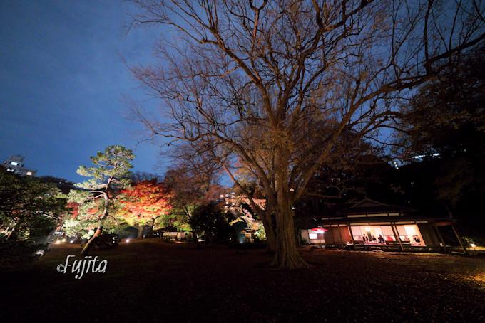 大名庭園の紅葉を出汐湊から一望!