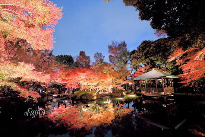 東京・大田黒公園の紅葉はインスタ映え確実!ライトアップも必見