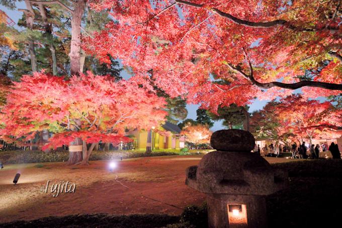 紅葉ライトアップ中の園内を散策!