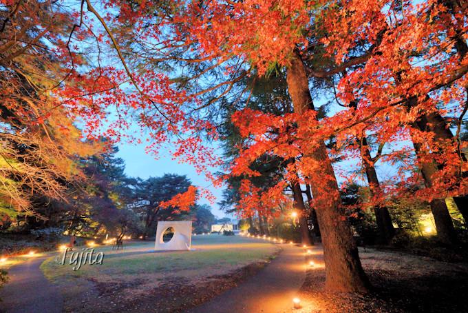 芝庭の紅葉ライトアップ!