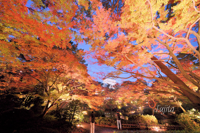 日本庭園の紅葉ライトアップ!
