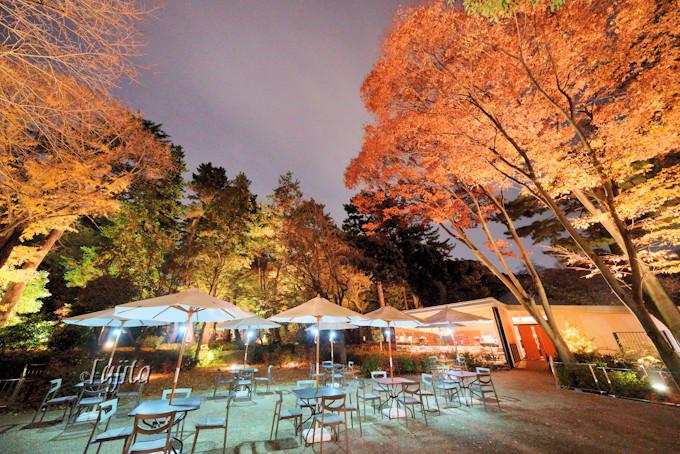 西洋庭園の紅葉ライトアップ!