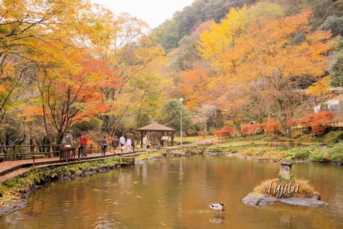 おのころ池と紅葉がコラボ!